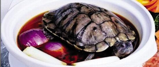 一煲金钱龟汤可以卖十多万元